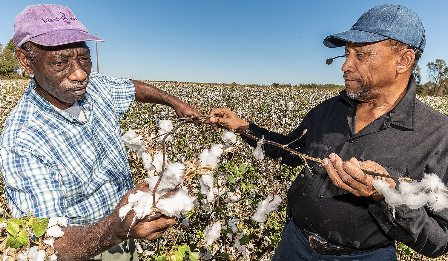Ricky Waters (left) FVSU Extension program assistant for Macon County, inspects cotton crop damage with Willie Joe Daniels on his 25 acre farm near Oglethorpe.