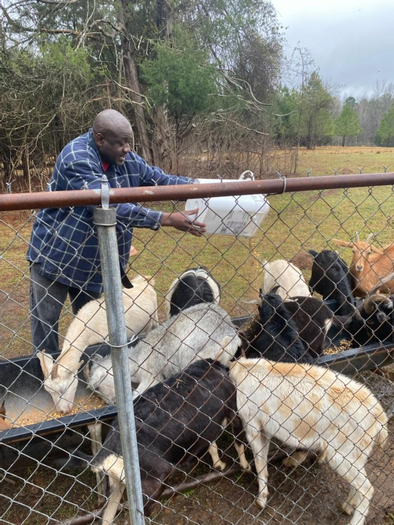 Talbot County farmer Trent DeSue (feeding goats) remains in contact with FVSU's Talbot County Extension agent Bobby Solomon with digital technology during the COVID-19 pandemic.