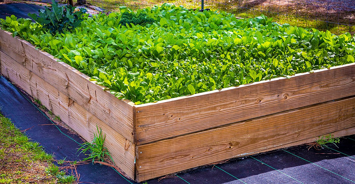 One of the raised bed garden boxes used to grow kale and mustard at the Village Community Garden.